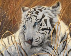 Portrait White Tiger 1 Poster By Lucie Bilodeau