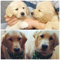 they grow too fast