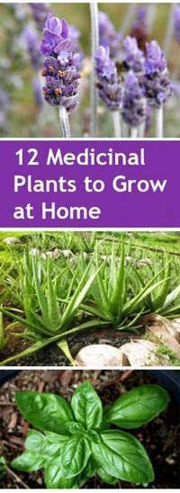 12 Medicinal Plants to Grow at Home Gardening home garden garden hacks garden tips and tricks growing plants gardening DIYs gardening crafts popular pin medicinal gardening The post 12 Medicinal Plants to Grow at Home appeared first on Garden Ideas. Diy Garden, Garden Crafts, Garden Projects, Garden Landscaping, Garden Ideas, Garden Inspiration, Backyard Ideas, Diy Crafts, Garden Soil