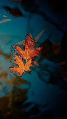Fallen Leaves IPhone Wallpaper – Cool Backgrounds