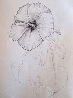 Hibísco vermelho aqui de casa | Flickr - Photo Sharing! Flowers, Art, Hibiscus, Rouge, Craft Art, Kunst, Royal Icing Flowers, Flower, Florals