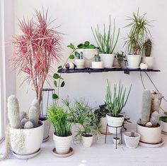 Cactus-heaven  Photograph by DesignLoveFest on Instagram    From House of Thol: More pretty indoor plantlife