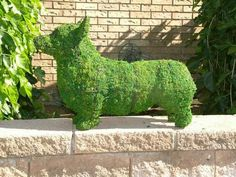 This past weekend I went to a Home and Garden Show with a friend and found this corgi topiary. It was expensive, but I decided I couldn't . Cute Corgi, Corgi Dog, Dog Cat, Corgi Pictures, Terrier, Shelter, Pembroke Welsh Corgi, Pets, I Love Dogs
