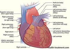 Cardiac arrest vs heart attack heart attack and cardiology httphealth treatmentwp contentuploads201409heart diagram 5g ccuart Choice Image
