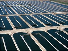 algae farm aerial - Google Search