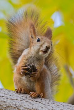 """Squirrel: """"Sorry?!  I didn't catch what you said!  Please can you repeat it?"""""""