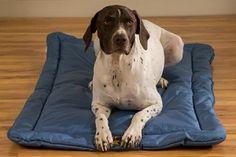 TUFF Bed Crate Pad - Chew Proof Guarantee