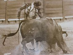 El torero Rafael de Paula Book Art, Artist, Animals, Poster, Antigua, Men, Pictures, Animales, Animaux