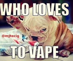 Now who wouldn't want to rise up and support him? #Vapeon little guy, vape on!