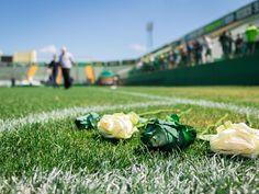Rosas brancas e verdes em homenagem aos jogadores do Chapecoense na Arena Condá