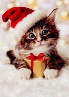 Time to get your Christmas Cards and Gift Cards for Christmas Kitten, Christmas Animals, Funny Christmas, Christmas Shopping, Christmas Christmas, Cute Kittens, Cats And Kittens, Gif Noel, Kitten Photos