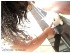 Sahabat Montessori Sarana Anak Hebat Montessori, Horses, Horse