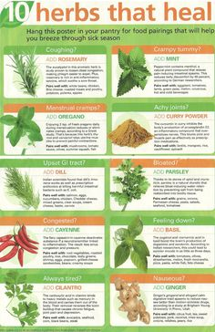 10 herbs that heal- great to keep in mind!