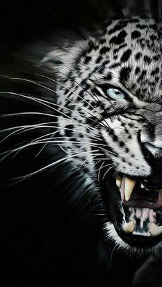 Tiger Dark Animal Love Nature Iphone 7 Wallpaper Iphone 8