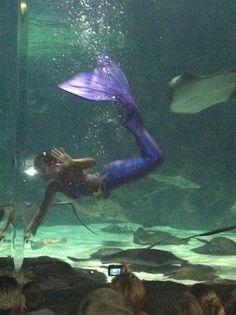 Fancy Fins Mermaid Boutique At Ripley 39 S Aquarium Myrtle