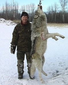 Predator hunting, wolf hunting Alpine Outfitters by Lowell Davis - OUTDOORSMAN.com