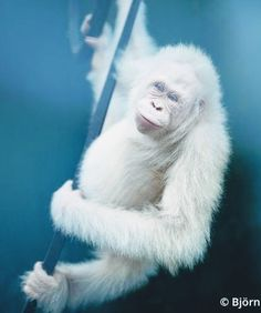 Cutest Animals On Earth, Cute Baby Animals, Animals And Pets, Funny Animals, Cute Animal Photos, Animal Pictures, Beautiful Creatures, Animals Beautiful, Rare Albino Animals