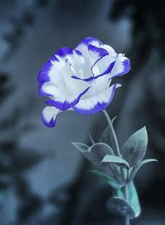 Esta flor é você!! O perfume suave do amor de Deus.