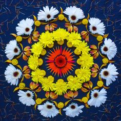 Beautiful mandala art created with fresh flowers and other organic materials, by Kathy Klein an Arizona, USA based-artist.