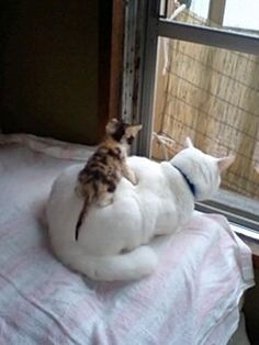 This mom knows how to live Hassle-Free- she's getting the most purfect back massage!