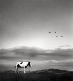Pentti Sammallahti - Druridge Bay, England [lonely horse] | From a unique collection of photography at http://www.1stdibs.com/art/photography/