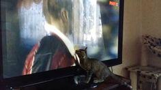 Bonia watches football Боня смотрит футбол