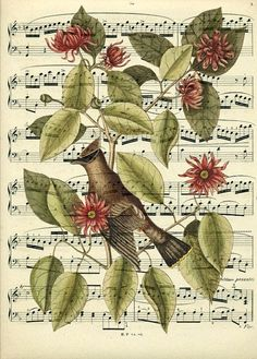 Biiiiiiirds! | 12 Breathtaking Examples Of Sheet Music Art