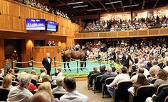 Super Majesty leads the way at Fasig-Tipton  https://www.racingvalue.com/super-majesty-leads-the-way-at-fasig-tipton/