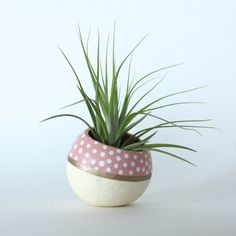 Air Plant Planter with Air Plant -  Natural, Peach, Gold & White.  Mother's Day Gift Idea