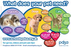 Pet care materials from PDSA (Great for displays) Animal Projects, Animal Crafts, Classroom Pets, Carnival Of The Animals, Dear Zoo, Class Pet, Eyfs Activities, Pets For Sale, Creative Curriculum