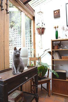 La gatita - AD España, © Natalie Jeffcott/Apartment Therapy