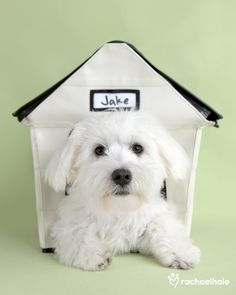 Rachael Hale's pic of the day : Jake. What a cute...