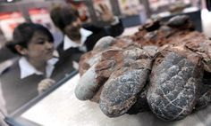 Dinosaurs put eggs in wrong evolutionary basket: scientists