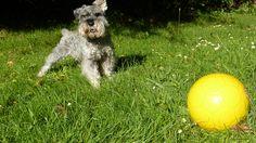 I love yellow footballs!