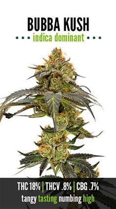 Bubba Kush | Repined By 5280mosli.com | Organic Cannabis College | Top Shelf Marijuana | High Quality Shatter