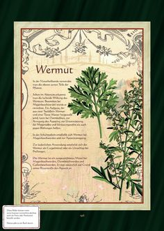 Wormwood - Wormwood Tea More Source by Plants Are Friends, Healing Herbs, Growing Herbs, Medicinal Plants, Aquaponics, Herbal Medicine, Garden Plants, House Plants, Natural Health