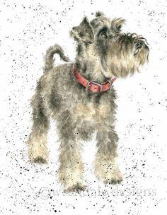 Wrendale Designs (Hannah Dale) Reminds me of Edel. Raza Schnauzer, Schnauzer Art, Miniature Schnauzer, Watercolor Pictures, Watercolor Animals, Watercolour, Wrendale Designs, Card Designs, Whimsical Art