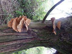 paddestoel aan boom