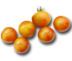 Heirloom Tomato Seeds, Tomatoes, Non-GMO, Untreated, Organic Seed – Sandia Seed Company Heirloom Tomato Seeds, Heirloom Tomatoes, Cherry Tomatoes, Growing Tomatoes, Growing Vegetables, Potted Fruit Trees, Cherokee Purple, Cherry Candy, Seed Catalogs