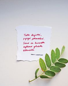 Tommy Tabermann <3 | Pupulandia Great Words, Wise Words, Carpe Diem Quotes, Finnish Words, Note To Self, Beautiful Words, Funny Texts, Happy Life, Affirmations