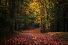"""Autumn road - This picture was in my hard drive for too long time. I happened to find it when I was recollecting some memories by browsing past traveling photos. It was taken hand-held, so that there is not much depth of field here. However, I really like the intense fall color exhibited in West Virginia.   Thanks for looking! I hope you can follow my <a href=""""https://www.facebook.com/suchenphotography"""">FACEBOOK</a>   <a href=""""https://www.flickr.com/photos/windwalkerchen/"""">Flickr</a>"""