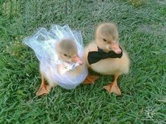 Ducks forever