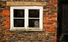 """""""An owl who is afraid of flying outside in big open spaces has been given his own red brick house. Gandalf the great grey owl gets scared flying out in the open so his owners have built his aviary inside a brick shed. He now spends his days watching the world go by out of his window"""""""