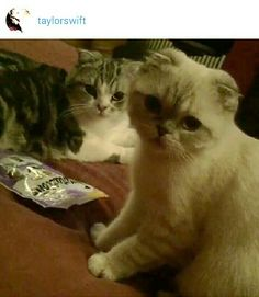 Olivia Benson~Swift & Meredith Cool Cat's