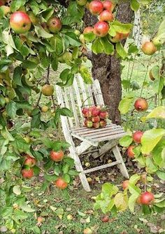 Gardening Autumn - One day my apple tree will be this laden with fruit. - With the arrival of rains and falling temperatures autumn is a perfect opportunity to make new plantations