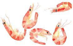prawns Shrimp watercolor - food, seafood, art print, illustration