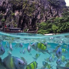 "enjoyoutdoors: ""Underwater life at Poda Island Thailand  