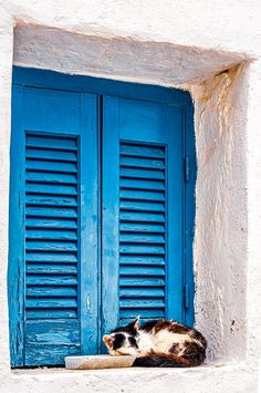 Cat in Isternia, Tinos, Greece