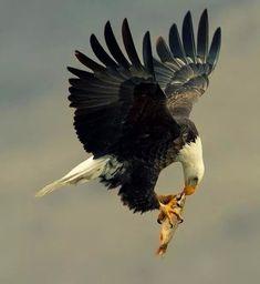 Eating in midair