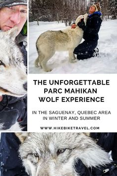 The unforgettable Parc Mahikan Wolf Experience in the Saguenay, Quebec area. Spend time with a pack of wolves and then stay overnight so you can listen to them howl. A memorable, authentic, uplifting nature experience #wolves #nature #quebec #wolfexperience #saguenay #ParcMahikan #wolf
